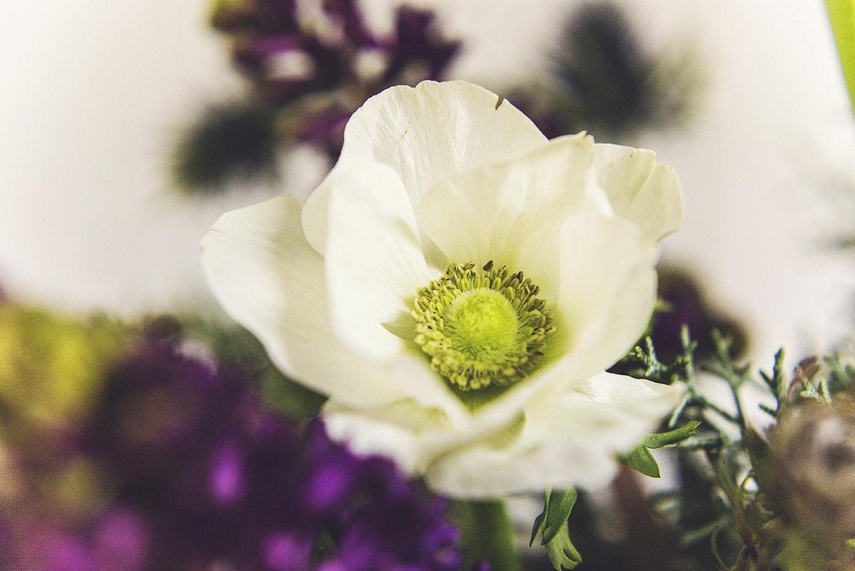 Λουλούδια ανεμώνες για χειμωνιάτικο γάμο