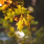 Autumn next day photoshoot
