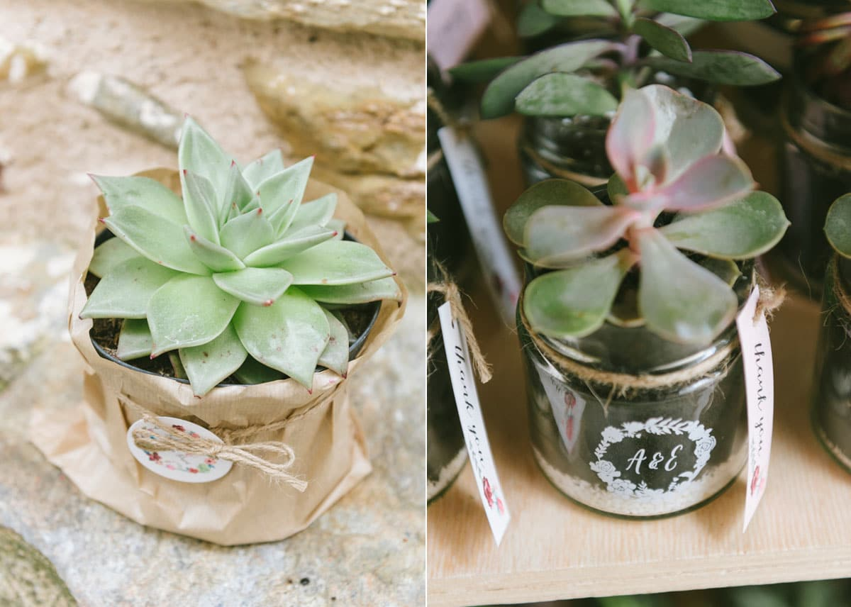 Decorative succulents plants for your wedding guests